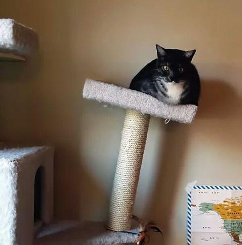 Как выбрать когтеточку для котенка. Виды когтеточек для котов