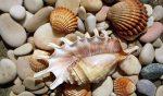 Поделки из ракушек и камней для детей – Поделки из морских камней и ракушек. Идеи, инструкции для детей, сада, дома. Пошаговые мастер-классы